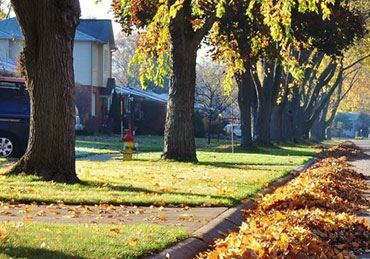 Image de la catégorie arbre & jardin